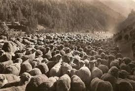 Popoli e terre della lana. Tradizioni culture e sguardi sulle vie delle transumanze tra Iran e Italia.