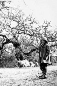 FOTOPASSIONE. Il pastorello – piccolo grande uomo dell'Aspromonte.